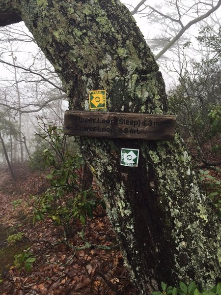 The trail is pretty clearly marked.