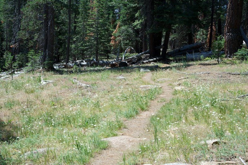 The trail opens up some as you descend into the Snow Creek watershed.  Wildflowers bloom in the summer.