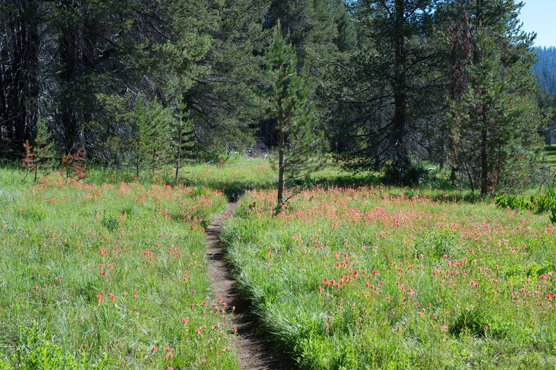 Flowers blooming along the trail as it skirts McGurk meadow.