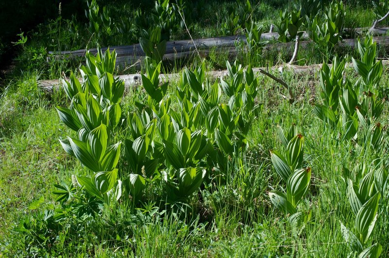 Plants along the trail as you descend toward the Pohono Trail.