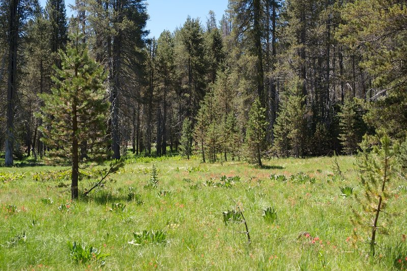 The area where the meadow begins to blend with the forest.