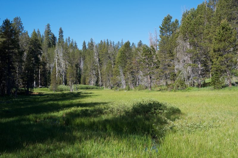 A view to the west of McGurk Meadow, you can see the water winding it's way through meadow.