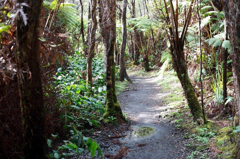 Hike through the rainforest.