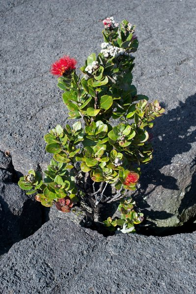 Flowers growing up from the lava inside the crater.