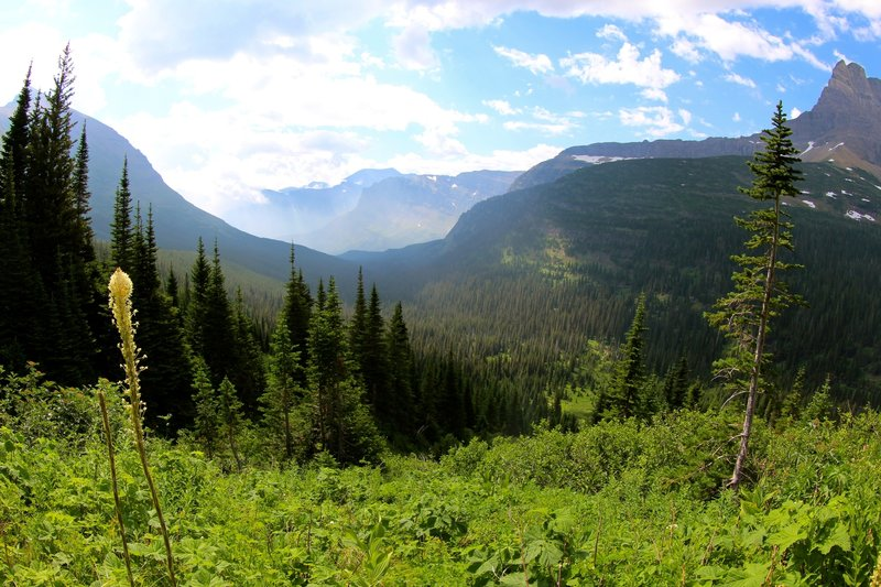 Looking back towards Swiftcurrent Lake