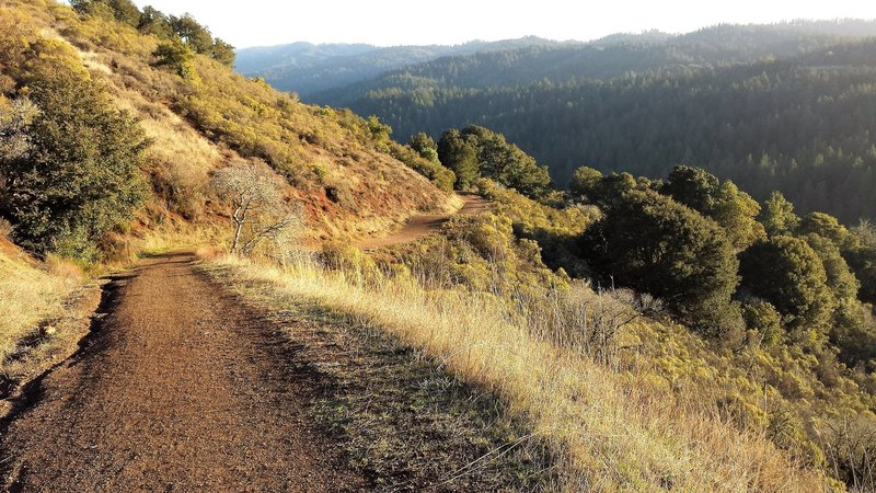 Indian Creek Trail looking down Stevens Creek Canyon and San Andreas Fault.