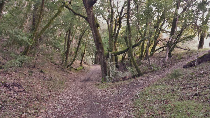 Canyon Trail on Stevens Creek.
