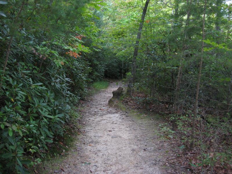 Start of Moore's Wall Loop Trail