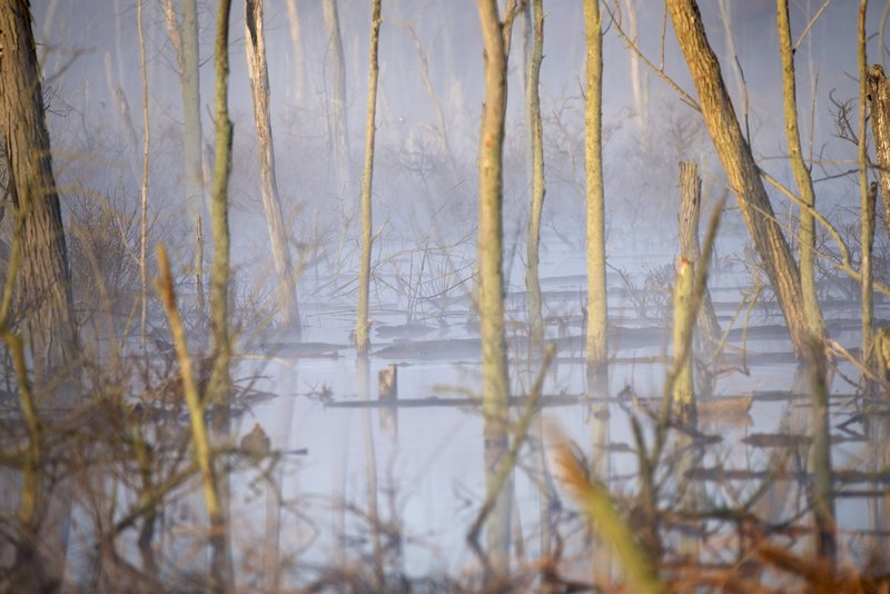 Early sun burning off the morning fog on the Great Marsh.