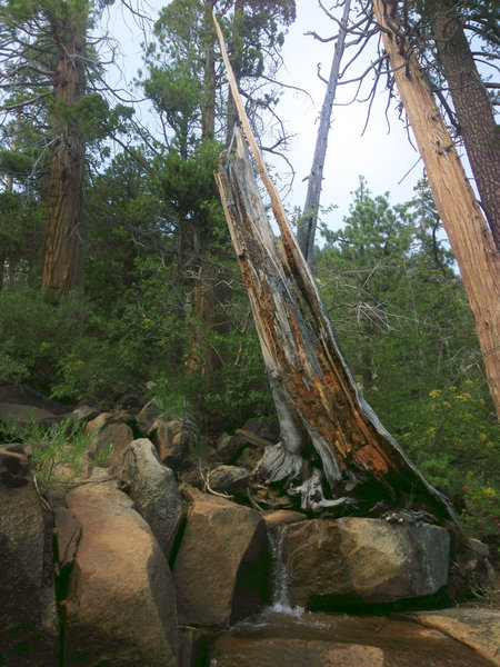 Another cool shot along Cascade Falls Trail.