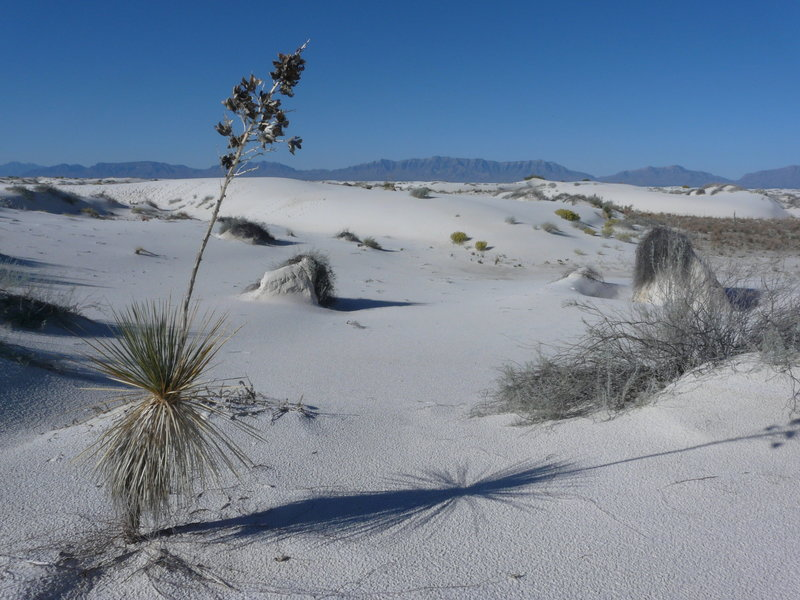 White Sands NM - Backcountry Camping Loop trail