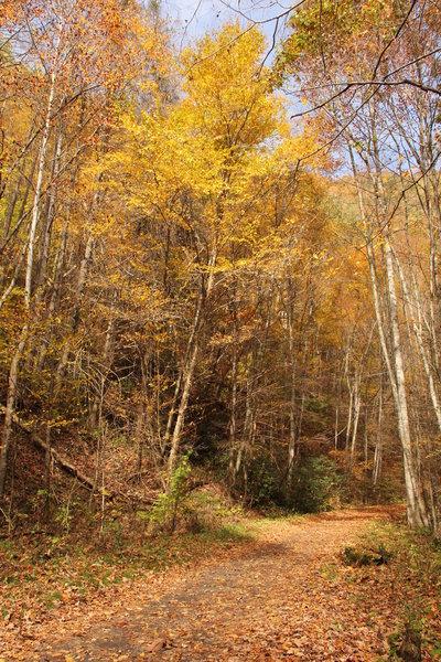 Virginia Creeper Trail in the fall.