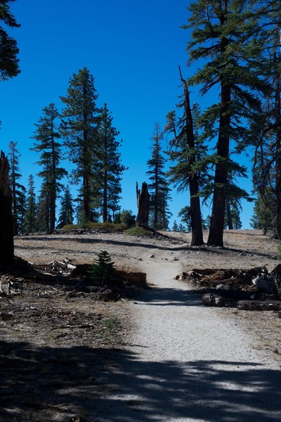 Trail as it approaches Indian Ridge and the trees begin to thin.
