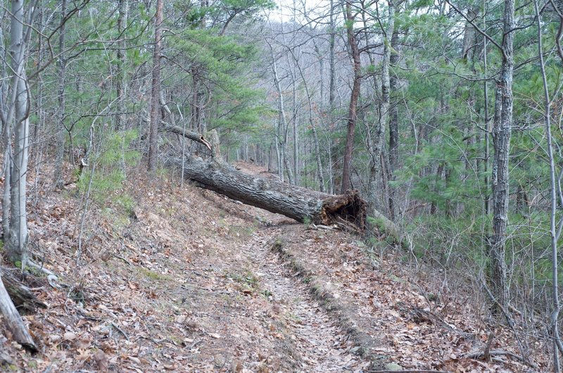 Tree blocks the trail, but it's easy to overcome. The trail is narrow past this point.