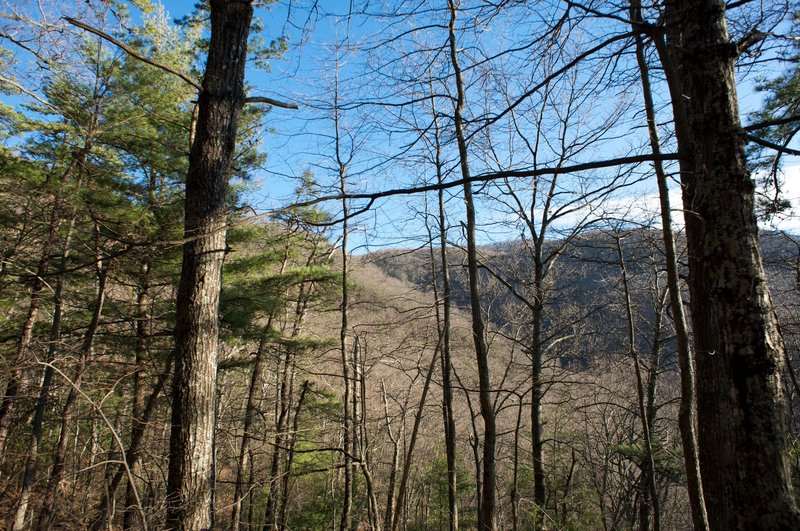 Most views of the mountains are obstructed by the trees along this trail.