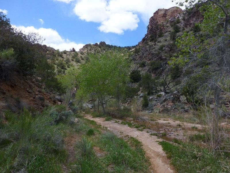 No Throughfair Canyon, Colorado National Monument, Colorado
