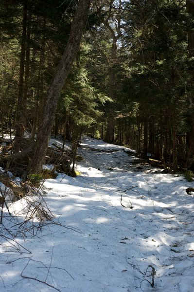 The higher elevations and the shade can allow you the opportunity to walk through the snow even though the trail is clear at lower elevations.
