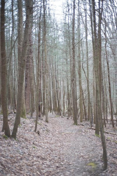 A trail through the woods as you climb toward Laurel Creek Road.