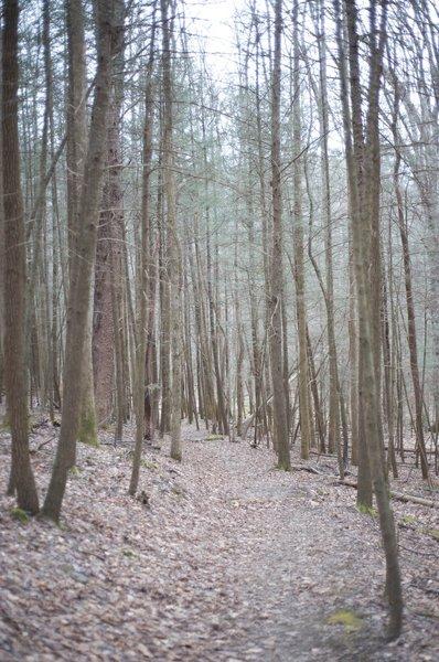 A trail through the woods as you climb toward Laurel Creek Road.