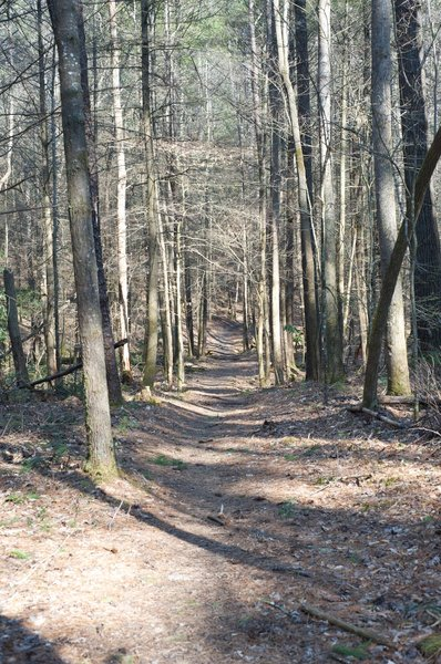 Finley Cane Trail as it moves away from Laurel Creek Road.