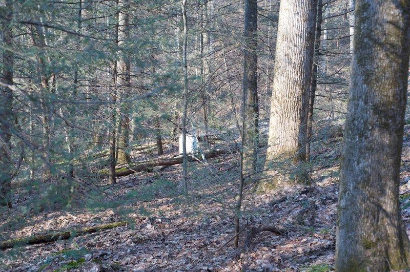 Boar trap sitting off the trail.