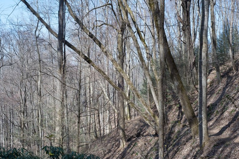 The trail winds along the ridges of Fodderstack Mountain.