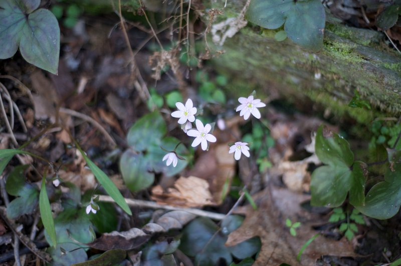 Wildflowers growing along the trail.