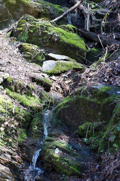 Small creek making it's way through mossy rocks.