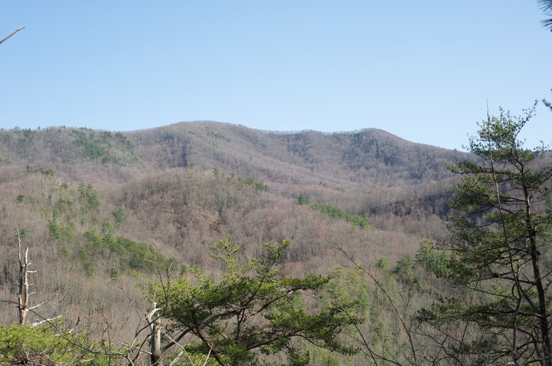 Looking up at the surrounding mountains through a gap in the trees.