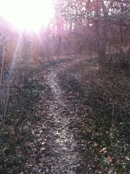 The sun going down on the trail.