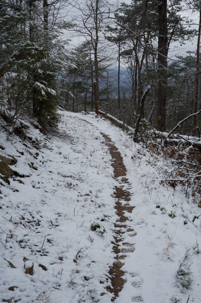 Chestnut Top Trail as it levels out and makes its way through the woods.