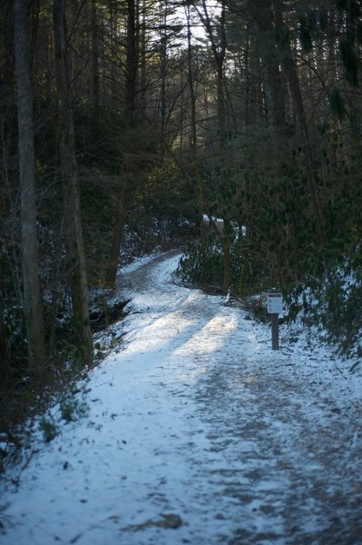 Bote Mountain Trail as it leaves Laurel Creek Road.