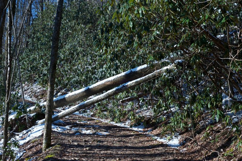 The wide Bote Mountain Trail works its way up Bote Mountain. Sometimes, downed trees are obstacles in the Smokies, although they are usually easy to get around.