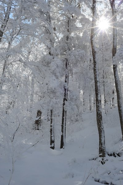 Snow covers the trees as the sun shines through on a beautiful day in the Smokies.