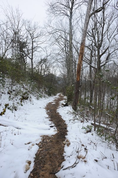 Even though the trail is relatively narrow, you'll notice that the forest doesn't crowd the trail at this point. This opens up some of the views as you climb.