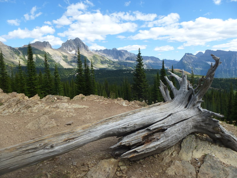 Looking at the Continental Divide from the trail from Granite Park Chalet on the way to the Loop.