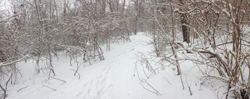 "6"" of fresh snow."