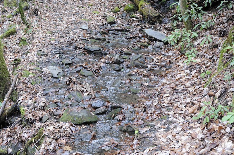 Small branch as it crosses the creek. You can see how the trail is covered in leaves that have fallen in the fall.
