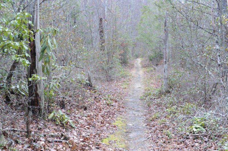 The trail narrows at points to singletrack. It's an easy climb through this portion of the trail.