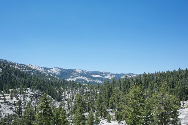 A view toward Tioga Road north of the trail.