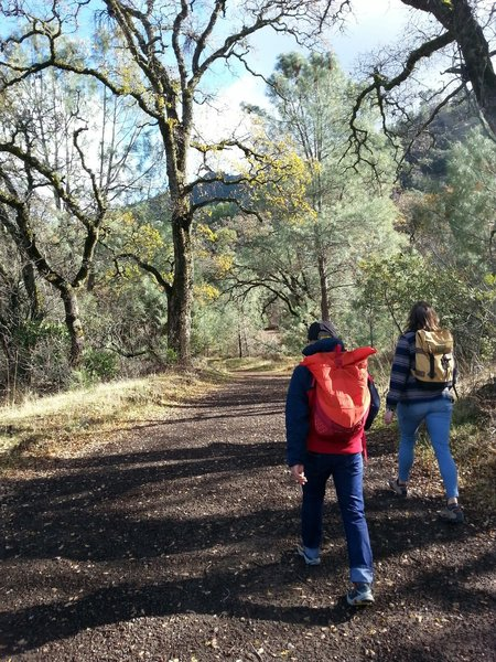 We got out of the blistery wind, found some incredible Oak, Pine, even Mistletoe on the Meridian Ridge Fire Road! Muah!