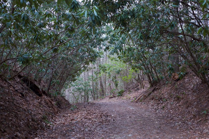 The definition of a Rhododendron tunnel can be found on the Schoolhouse Gap Trail.
