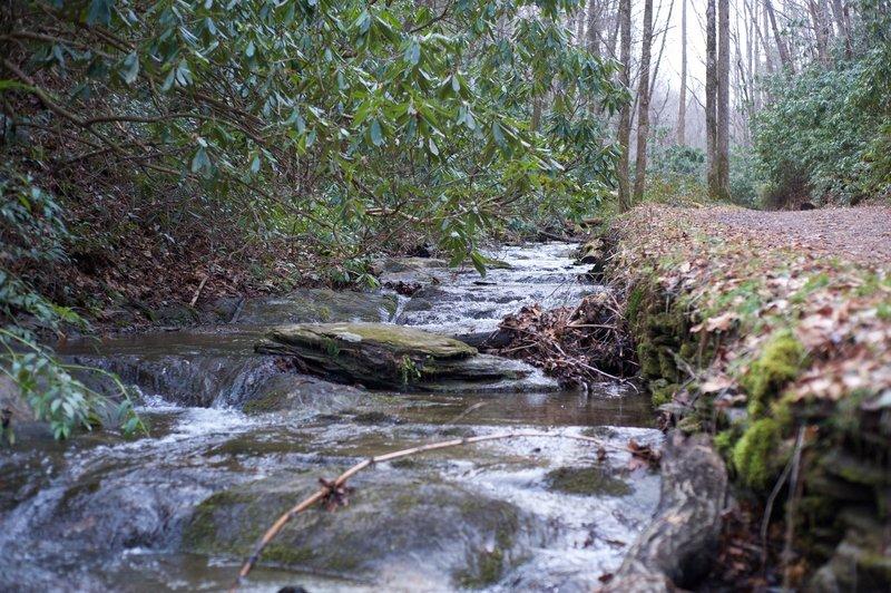 Spence Branch as it works its way toward Laurel Creek.