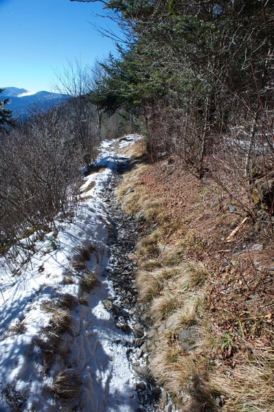 The Appalachian Trail is narrow in this section as it hugs the ridge on the North Carolina side before it crosses back over to the TN side.