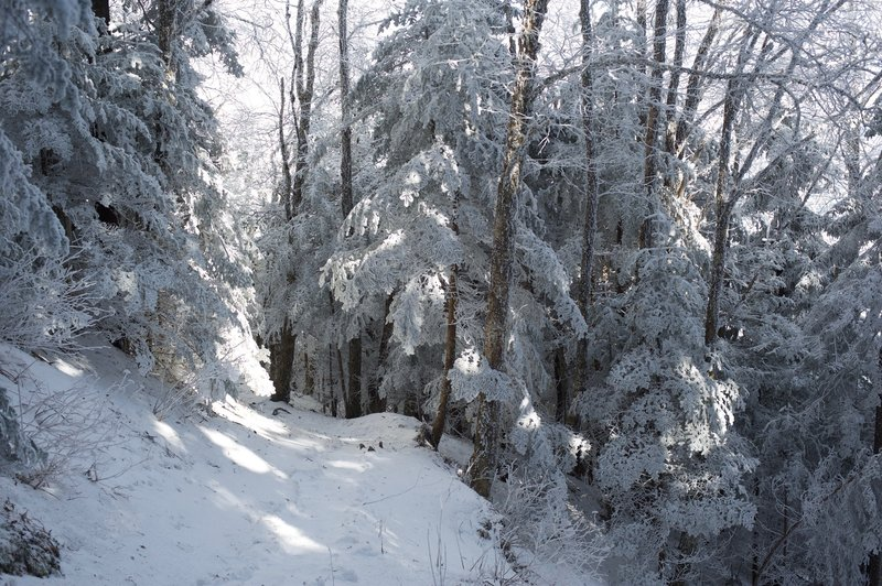 The trail moving through the woods as it moves toward Charlie's Bunion.