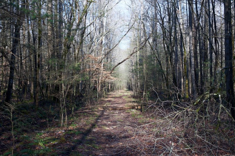 The Sugarlands Trail starts as a wide trail as it works its way to the Sugarlands Community.
