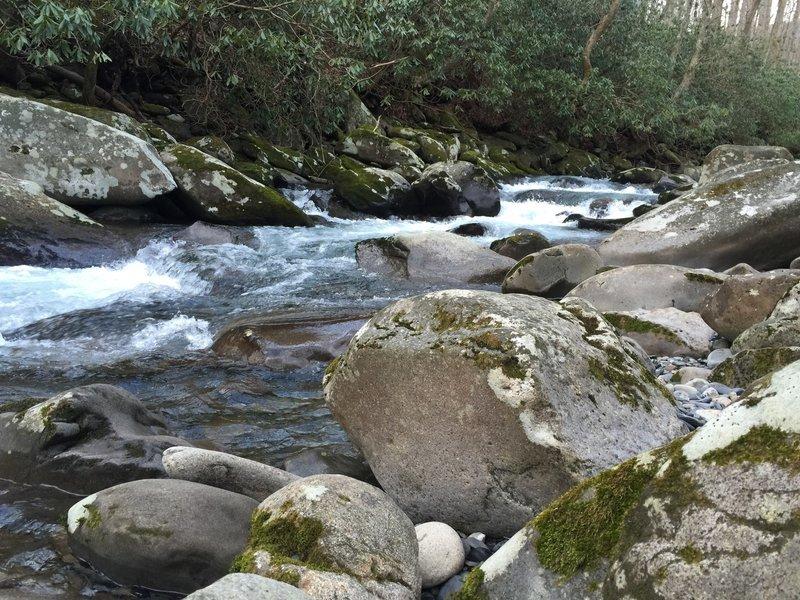 Porters Creek Trail in January.