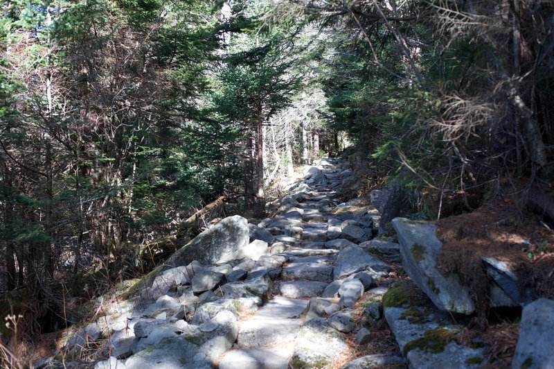 The trail as it descends from the Clingmans Dome parking lot. The rock steps make it easier to navigate this section of the trail.