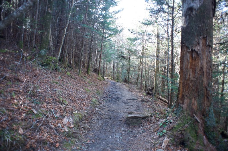 You can see the rocky, rooty trail as it works it was through the forest.