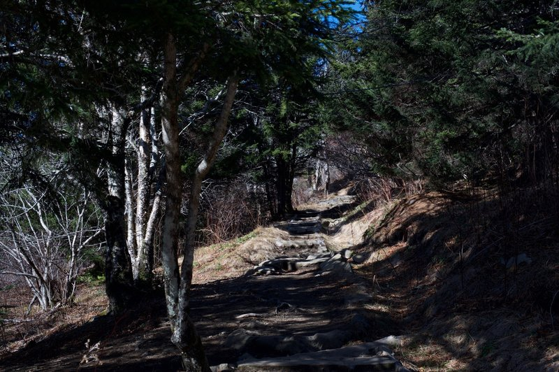 While it's a nice downhill on the way to Andrews Bald, it's an uphill climb back to the top of the trail at Clingmans Dome Parking Lot. Thanks to the work of the Friends of the Smokies, rocks have been put in places as steps to help with this climb.